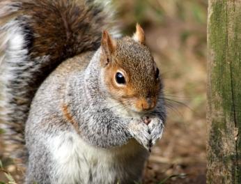 Squirrel at a spot we've named Squirrel Corner.